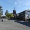 【興福寺】奈良時代の面影が残ってるのはなぜ?鹿に噛まれない様気を付けて!