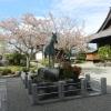 【飛鳥・橘寺】坂道を電動自転車で登ると静かな寺!聖徳太子が生まれた寺?